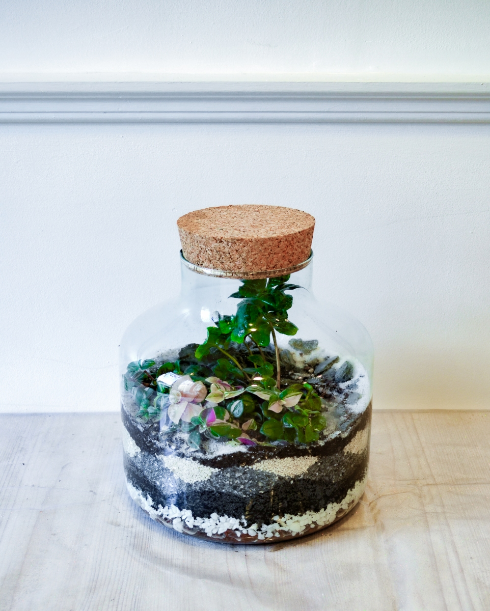 terrarium-be_vegetal-01