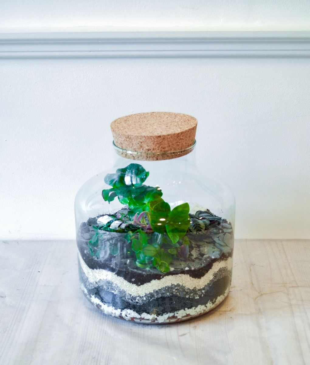 terrarium-be_vegetal-02