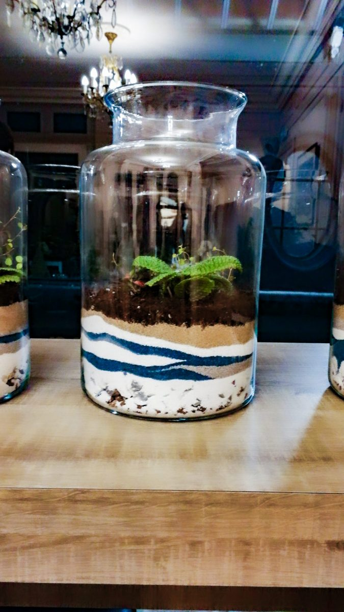 terrarium-be_vegetal-08-scaled