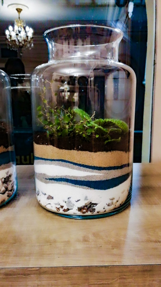 terrarium-be_vegetal-10-scaled